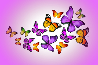 Orange And Purple Butterflies papel de parede para celular para Fullscreen Desktop 1024x768