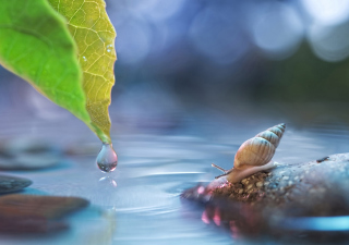 Little Snail Wallpaper for Android, iPhone and iPad
