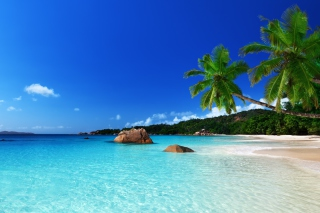 Tropical Paradise Background for Android, iPhone and iPad