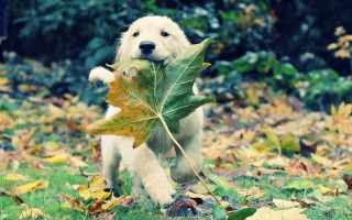 Dog And Leaf Background for Android, iPhone and iPad