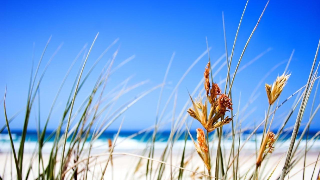 Dune, Grass At Beach