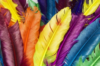 Colorful Feathers sfondi gratuiti per cellulari Android, iPhone, iPad e desktop