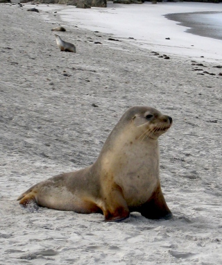 Seal Beach sfondi gratuiti per iPhone 6 Plus