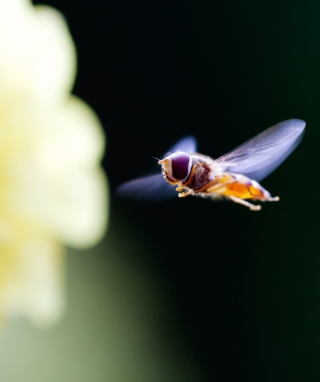 Flying Bee Wallpaper for iPhone 6 Plus
