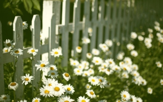 Daisy Fence Background for Android, iPhone and iPad