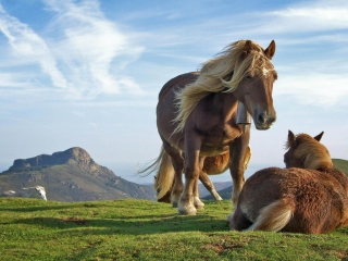 Mountain Horses Background for Android, iPhone and iPad