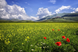 Poppy Meadow HDR Background for Android, iPhone and iPad
