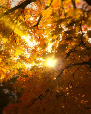 Kostenloses Autumn Sunlight and Trees Wallpaper für 176x220