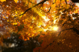 Autumn Sunlight and Trees Background for Android, iPhone and iPad