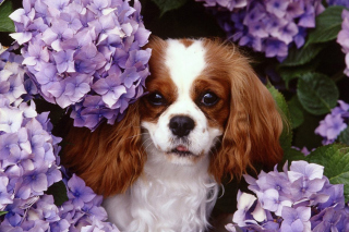 Free Flower Puppy Picture for Android, iPhone and iPad