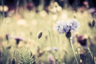 Meadow Flowers Vintage Wallpaper for Android, iPhone and iPad