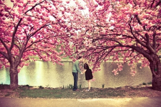 Spring Love Has Come Picture for Android, iPhone and iPad