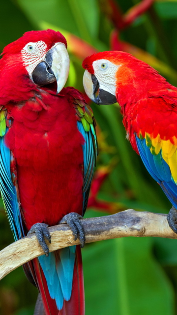 Two Macaws per Nokia N8