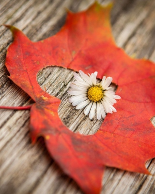 Leaf Heart And Daisy Wallpaper for iPhone 6 Plus