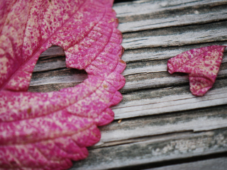Pink Heart Leaf Background for 960x800