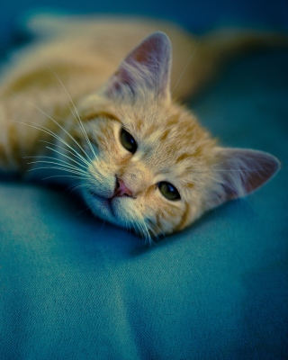 Sleepy Cat Background for Nokia X3