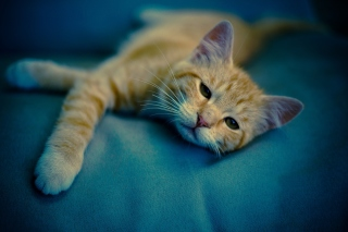 Sleepy Cat Background for Android, iPhone and iPad