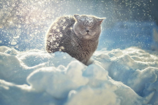 Cat Likes Snow Picture for Android, iPhone and iPad