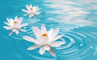 Kostenloses White Lilies And Blue Water Wallpaper für Fullscreen Desktop 1600x1200