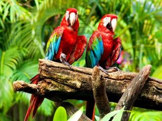 Exotic Birds para LG 900g