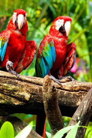 Exotic Birds para Huawei G7300