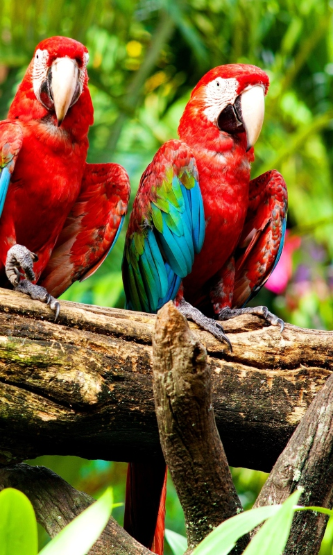 Exotic Birds per Nokia Lumia 800
