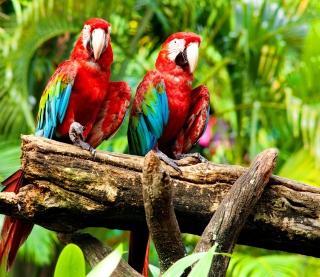 Exotic Birds sfondi gratuiti per iPad mini
