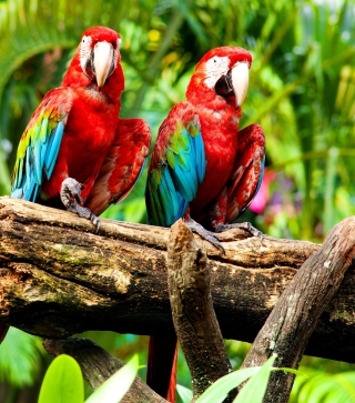 Free Exotic Birds Picture for Nokia Asha 306