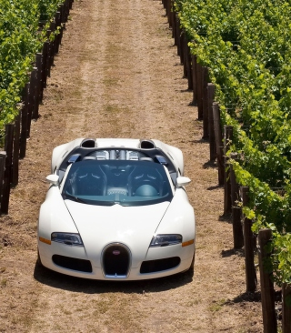 Bugatti Veyron In Vineyard sfondi gratuiti per iPhone 4S