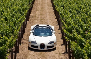 Bugatti Veyron In Vineyard Background for Android, iPhone and iPad