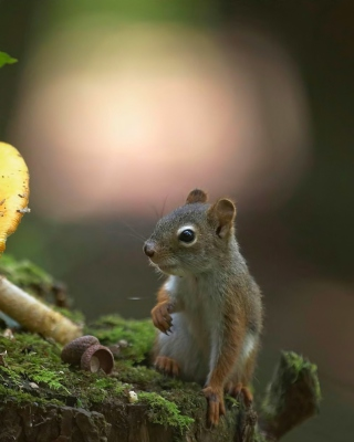 Squirrel with winter supply - Fondos de pantalla gratis para iPhone 4S