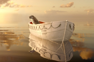 Free Life Of Pi Picture for Android, iPhone and iPad