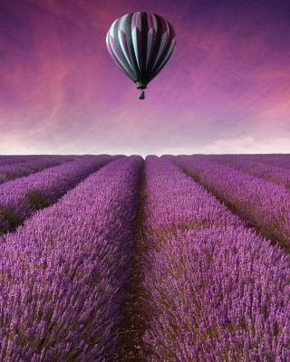 Air Balloon Above Lavender Field sfondi gratuiti per Nokia Lumia 925