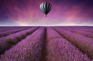 Free Air Balloon Above Lavender Field Picture for Android, iPhone and iPad