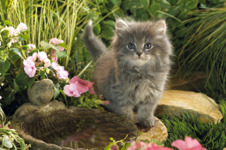 Cat In Garden Wallpaper for Android 480x800