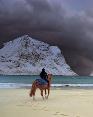 Horse on beach papel de parede para celular para iPhone 6
