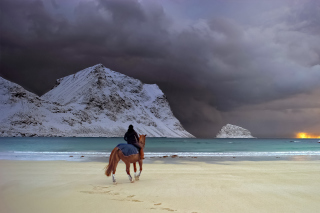 Horse on beach Background for Android, iPhone and iPad