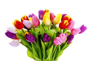 Tulips Bouquet Background for Android, iPhone and iPad