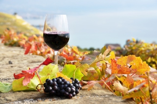 Wine Test in Vineyards Background for Android, iPhone and iPad