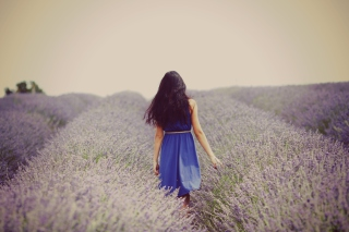 Lavender Dress Lavender Field Wallpaper for Fullscreen Desktop 1024x768