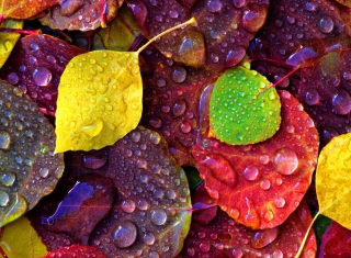 Colorful Leaves Wallpaper for Android, iPhone and iPad