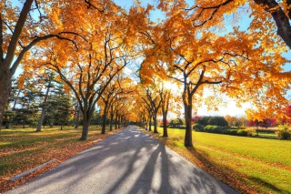 Autumn Alley in September Background for Android, iPhone and iPad