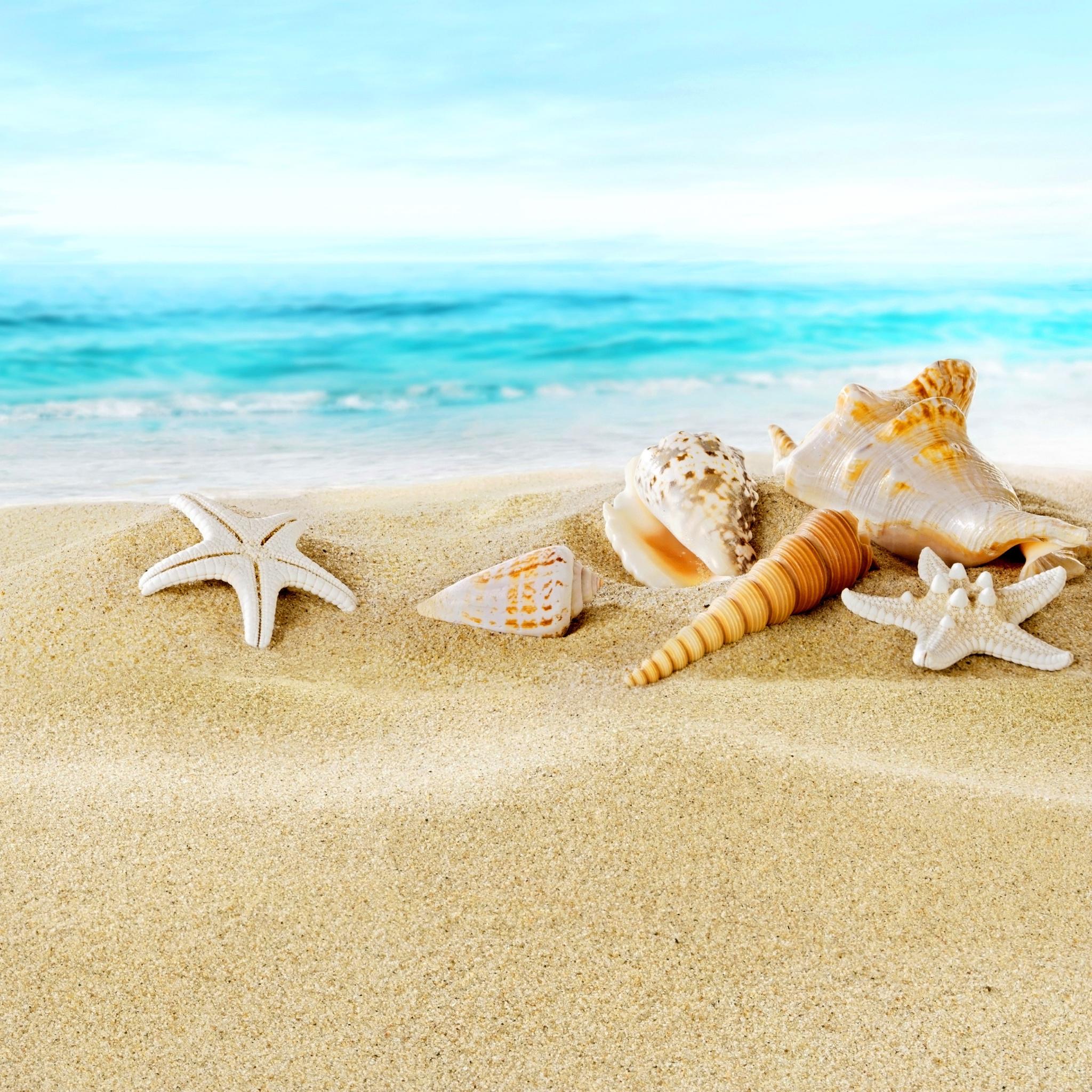 морская звезда песок ракушка скачать