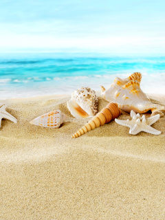 Screenshot №1 pro téma Seashells on Sand Beach 240x320
