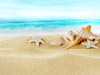 Screenshot №1 pro téma Seashells on Sand Beach 320x240