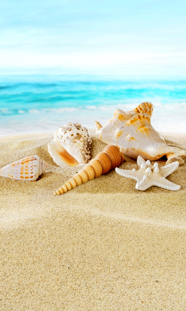 Sfondi Seashells on Sand Beach 768x1280