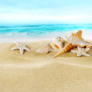 Seashells on Sand Beach Wallpaper for 1024x1024