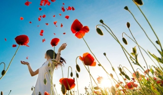 Girl In Poppies Wallpaper for Android, iPhone and iPad
