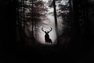 Обои Deer In Dark Forest на Nokia Asha 302