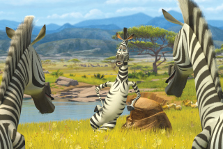 Zebra From Madagascar Background for Android, iPhone and iPad